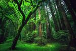 تحقیق-جنگل