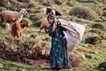 تحقیق-ایلات-استان-فارس