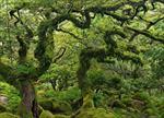 تحقیق-پيدايش-جنگل