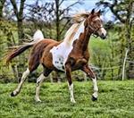 تحقیق-آیا-بین-سن-اسب-و-علوفه-مصرفی-ان-رابطه-ای-وجود-دارد؟