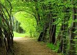 تحقیق-اهمیت-و-نقش-جنگل-ها