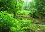 تحقیق-در-مورد-جنگل