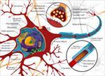 پاورپوینت-مدل-سازي-درد-با-استفاده-از-شبكههاي-عصبي-مصنوعي