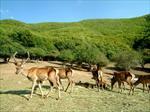 تحقیق-بررسی-تاريخچه-حفاظت-و-شكل-گيري-پارك-هاي-ملي-و-مناطق-حفاظت-شده