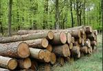 تحقیق-صنعت-چوب-و-جنگل