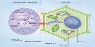 پاوپوینت روش های انتقال ژن ها در باکتری