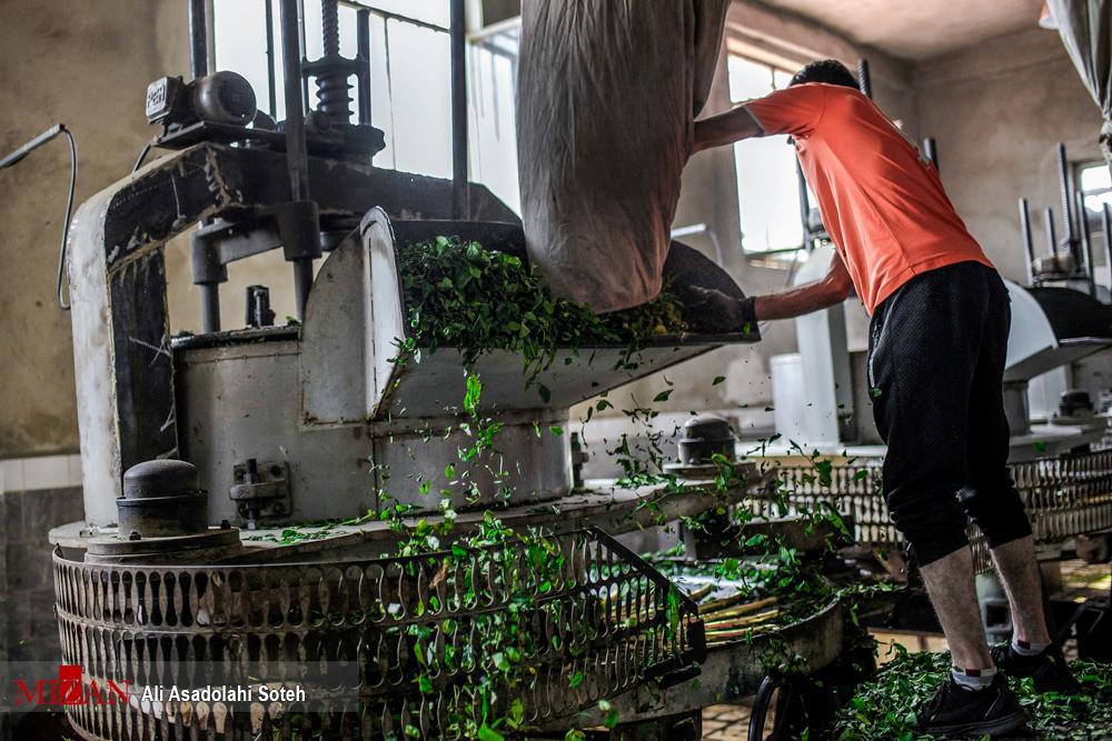 پاورپوینت طرح کارآفرینی طراحي كارخانه چاي