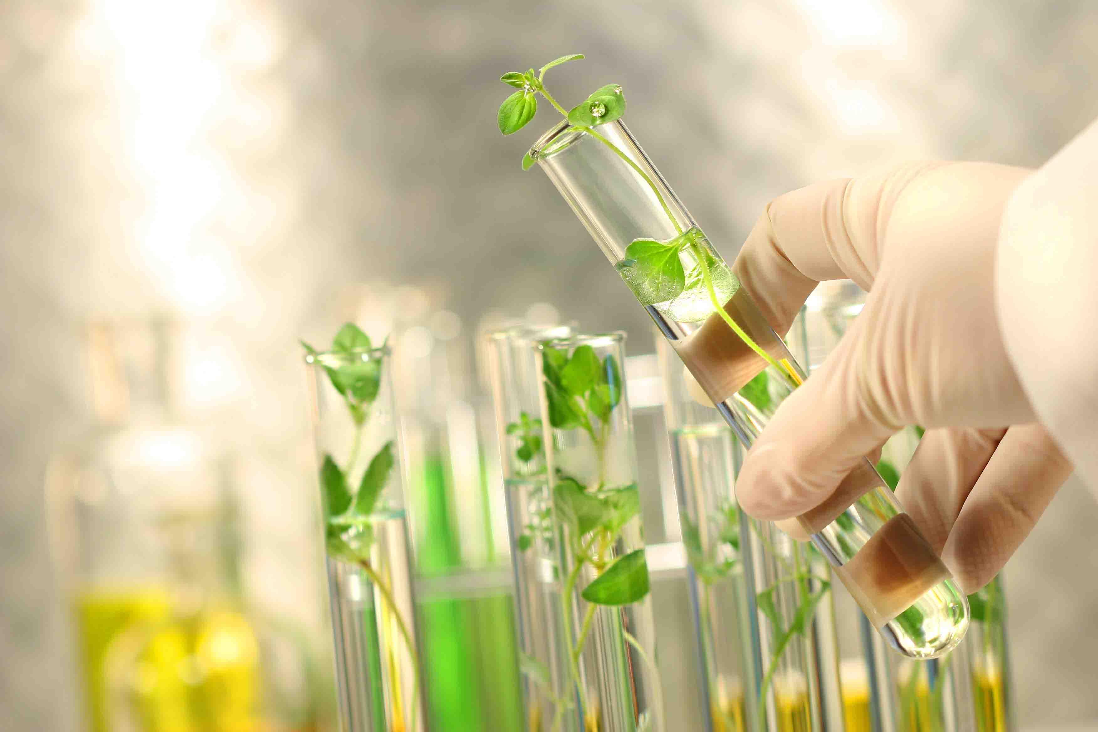 پاورپوینت روش های بیوتکنولوژی اصلاح گیاهان دارویی