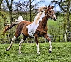 تحقیق آیا بین سن اسب و علوفه مصرفی آن، رابطه ای وجود دارد؟