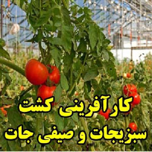 پاورپوینت طرح کارآفرینی کشت سیفی جات و سبزی جات