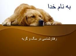 پاورپوینت رفتارشناسی سگ